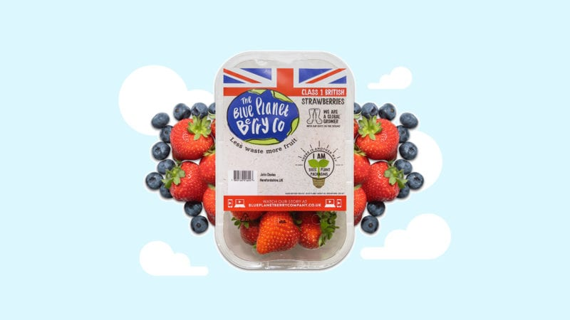 blue planet berry co strawberry packaging
