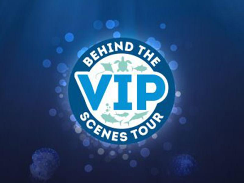 NMA VIP tour