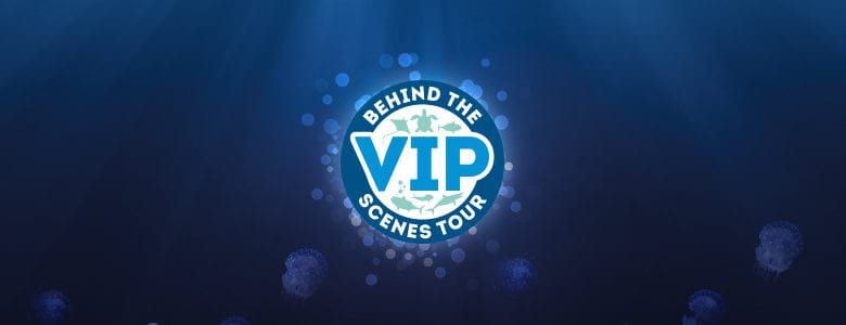 NMA VIP Bluestone360 tour banner