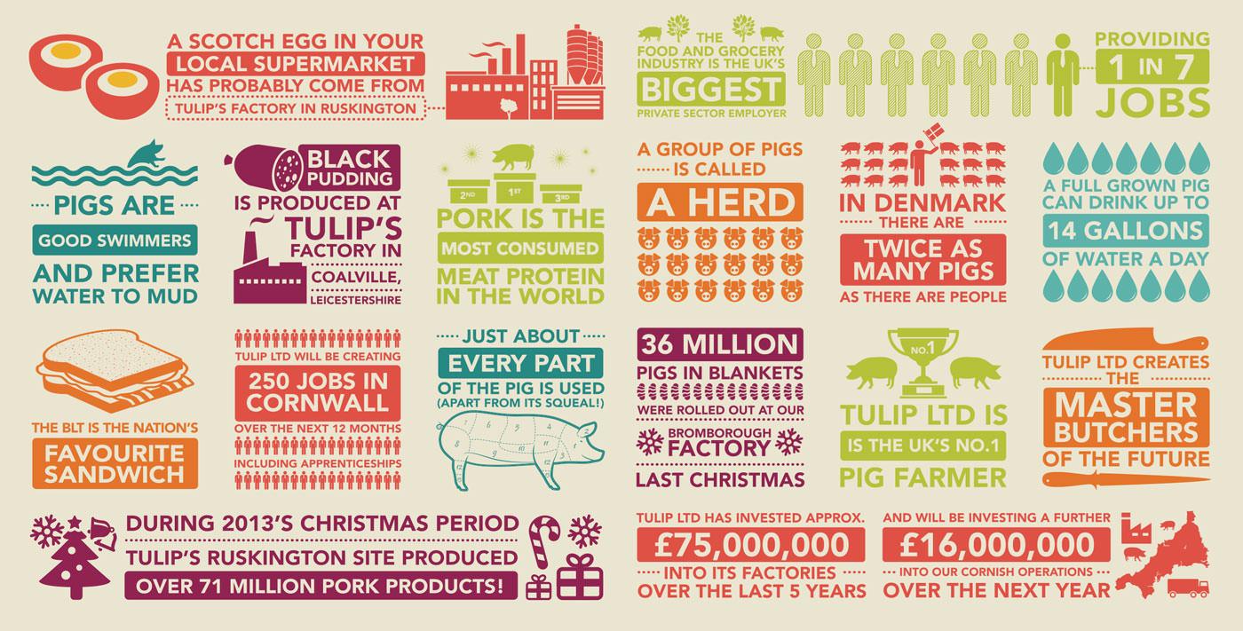 tulip infographics